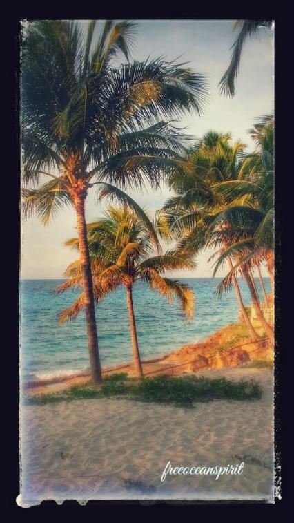 palm-tress-cuba