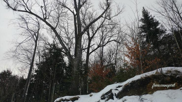 tress-landscape